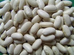 Chuẩn bị hạt giống đậu lùn trắng trước khi gieo